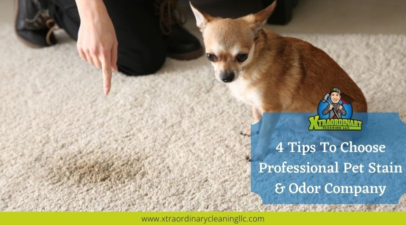4 Tips To Choose Professional Pet Stain & Odor Company