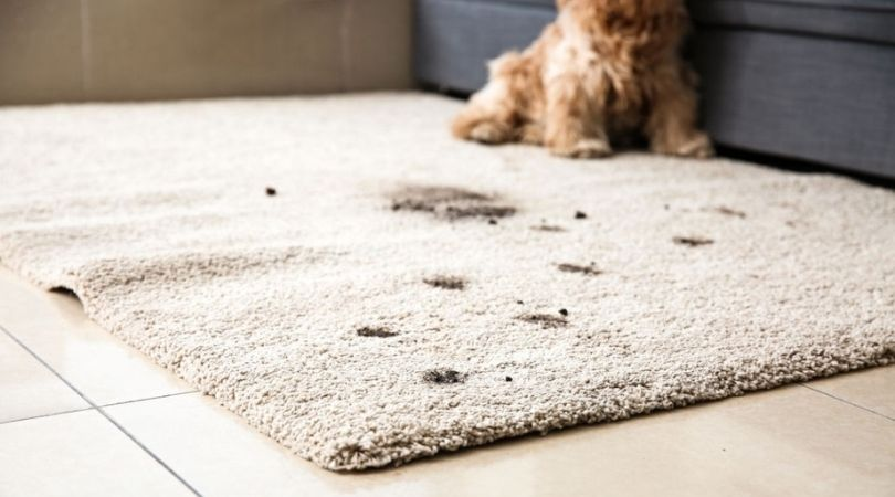 Pet Stain & Odor Removal Homestead