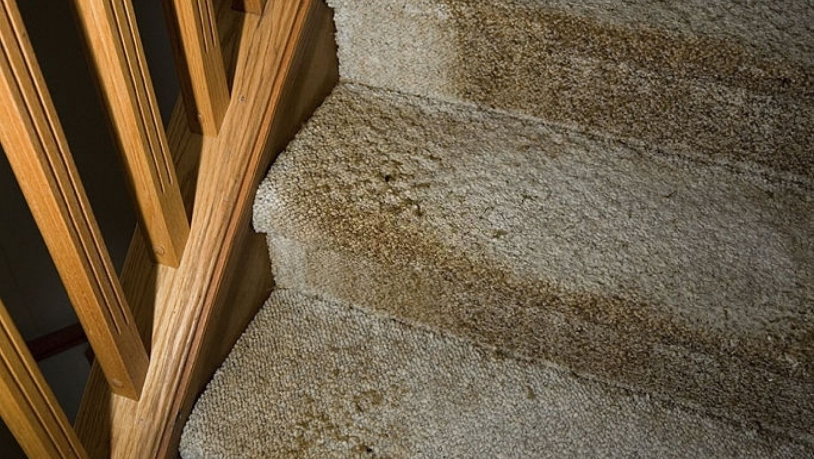 Water Damage Carpet Cleaning Services Homestead