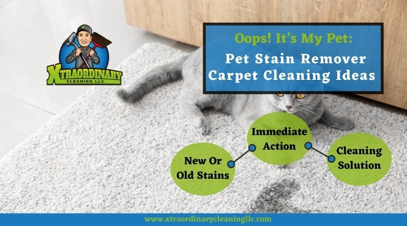 Oops! It's My Pet: Pet Stain Remover Carpet Cleaning Ideas