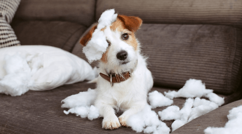 Furniture Deep Cleaning To Remove Pet Odors