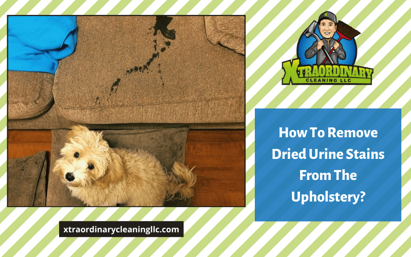How To Remove Dried Urine Stains From The Upholstery?
