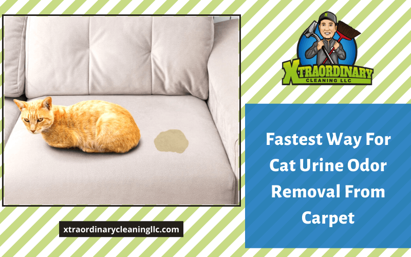 Fastest Way For Cat Urine Odor Removal From Carpet