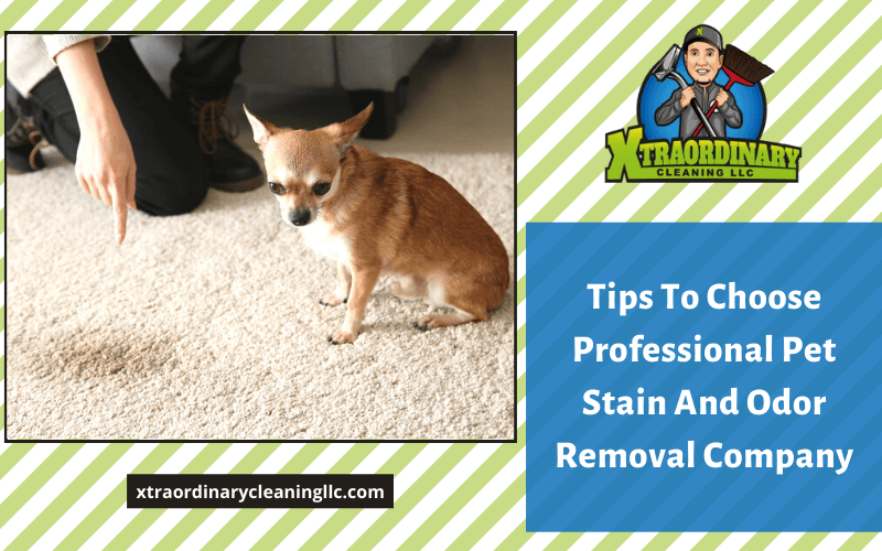 Tips To Choose Professional Pet Stain And Odor Removal Company